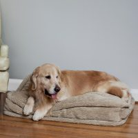 Snoozer Pillow Top Dog Bed | Show Dog | 9 Colors | 4 Sizes