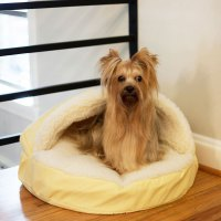 Snoozer Luxury Orthopedic Cozy Cave Dog Bed | 30 Colors