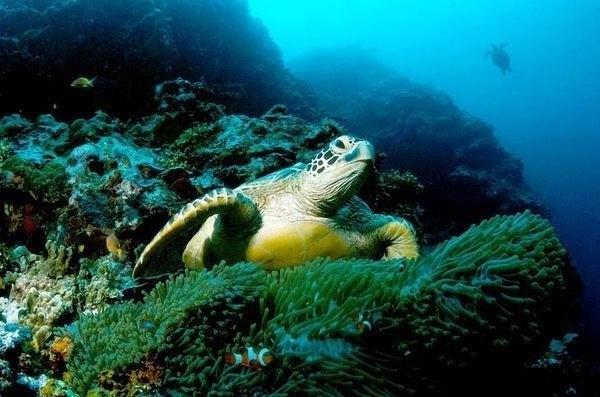 turtle caribbean tobago