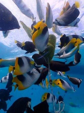 Aquabike adventures Bora Bora