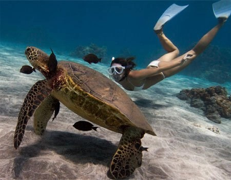 best-snorkeling-maui-beaches-maluaka