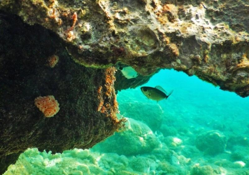 Karaka Unterwasser
