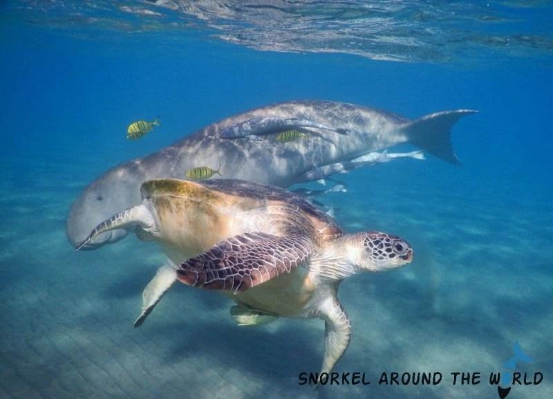 Marsa Mubarak - Marsa Alam - Snorkeling with dugong and turtles