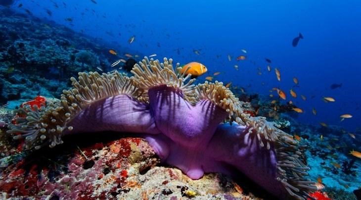 best-snorkeling-maldives-resorts-bathala-resort-coral-reef