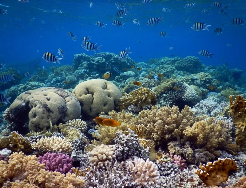Dahab snorkeling places -Napoleon Reef