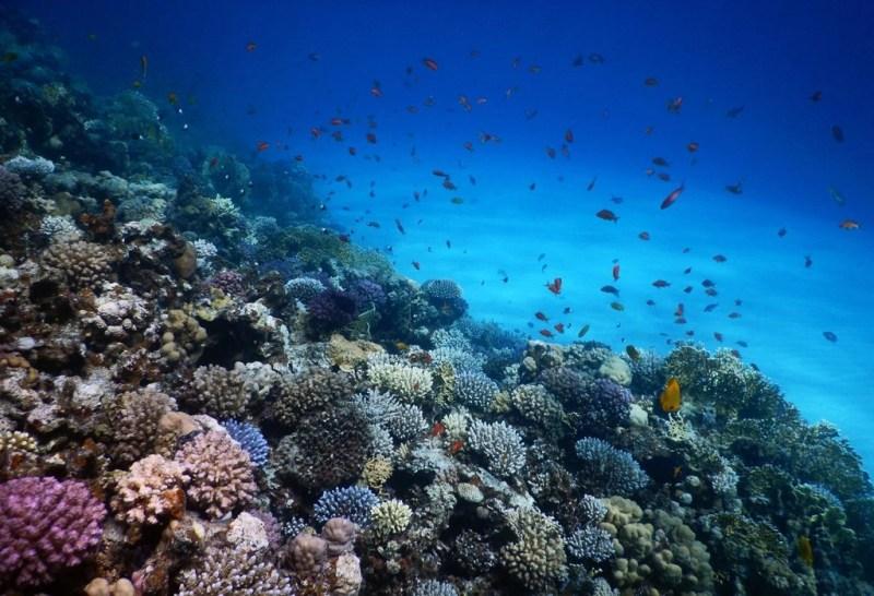eel-garden-coral