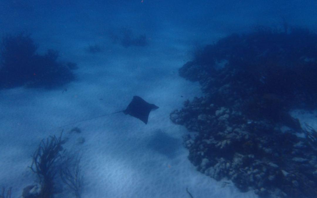 Snorkelling in Tobago – It's fun!