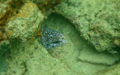 Snorkelling – It's a Tobago lifestyle!