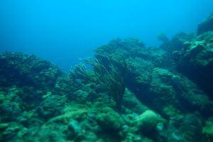 Beauty of the Sea Fan