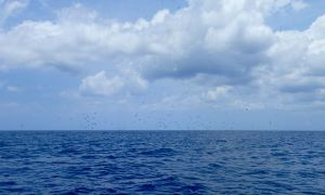 Flock of Birds hunting flying fish