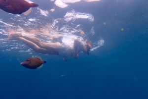 Snorkelling in Cotton Bay