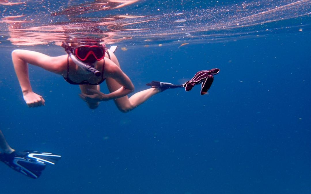 Snorkelling with the Largest Turtle in the World