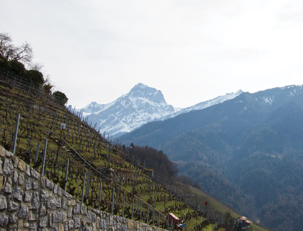 vineyards near Villars