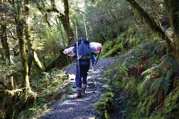 Hiking forest Mt Aspiring approach