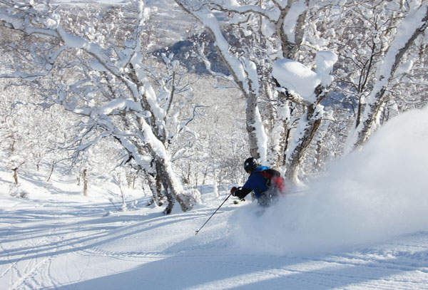 In the trees with First Tracks Hanazono