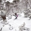 powder riding at Mt Mawson