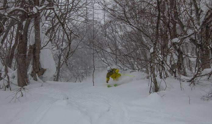Local Ski Guide Junya Kuragane enjoys Hachimantai Shimokura ski resort's tree zone.