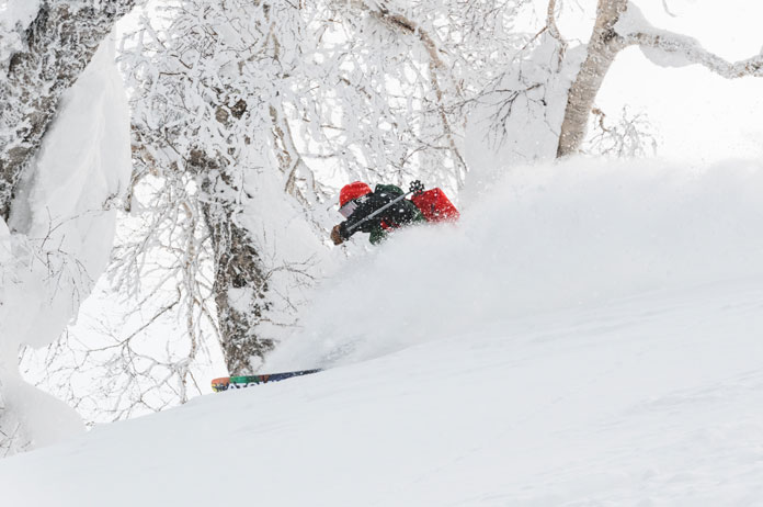 powder skiing trees at Kiroro