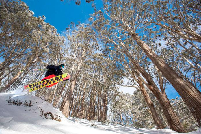Tree skiing at Buller