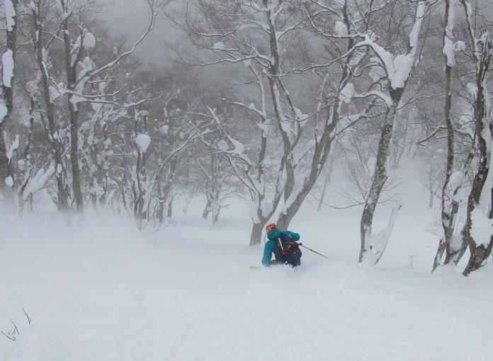 Skiing trees at Aomori Spring Resort