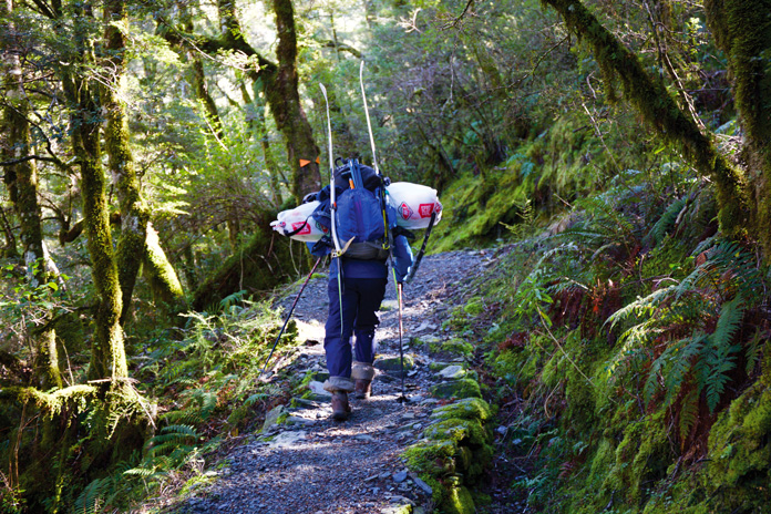 Hiking through native beech forest on the track up towards Mt Aspiring