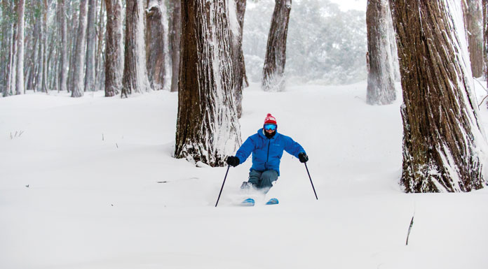 Skiing powder in the mighty mountain ash forest at Mt Buller
