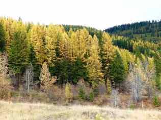 The beautiful fall colors!