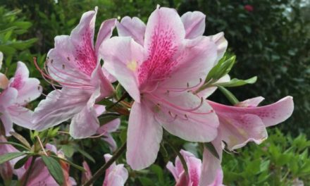 Spring Events at Bellingrath Gardens and Home