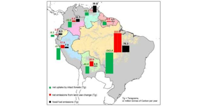A diagram of the Amazon's carbon uptake