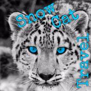 Snow Cat Travel