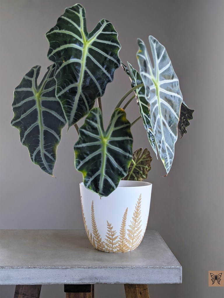Alocasia plant inside decoupage planter with fern leaves