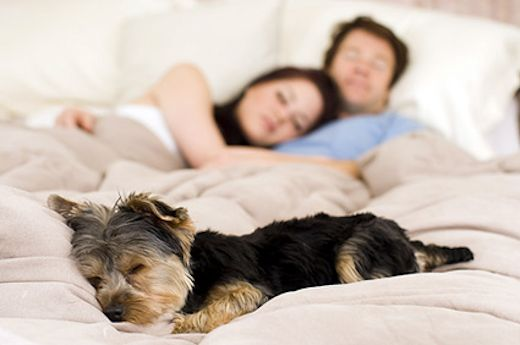 Should Your Dog Sleep in Your Bed?