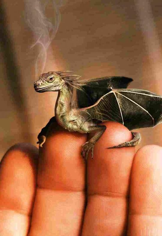 So comes snow after fire, and even dragons have their endings. ~ J.R.R. Tolkien, The Hobbit