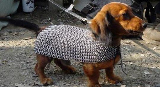 War Dogs in Armor