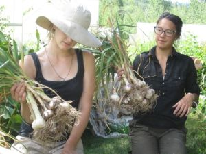 Ellen, Liz & Garlic harvest