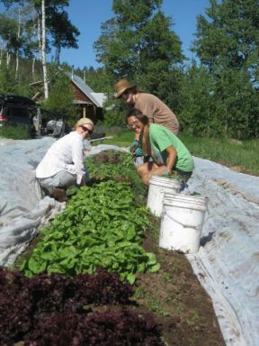 Melanie & Liz working with Shannon on weeding lettuces