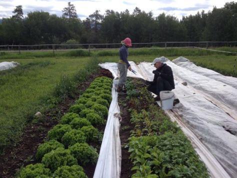 2014 Greens Harvesting