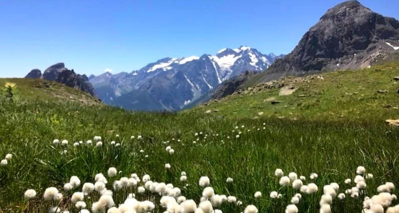 femmes-montagne-ete-detente-randonnee-bien_etre-decouverte-hautes-alpes-faune-flore-alpage-prairies-chalets-flore