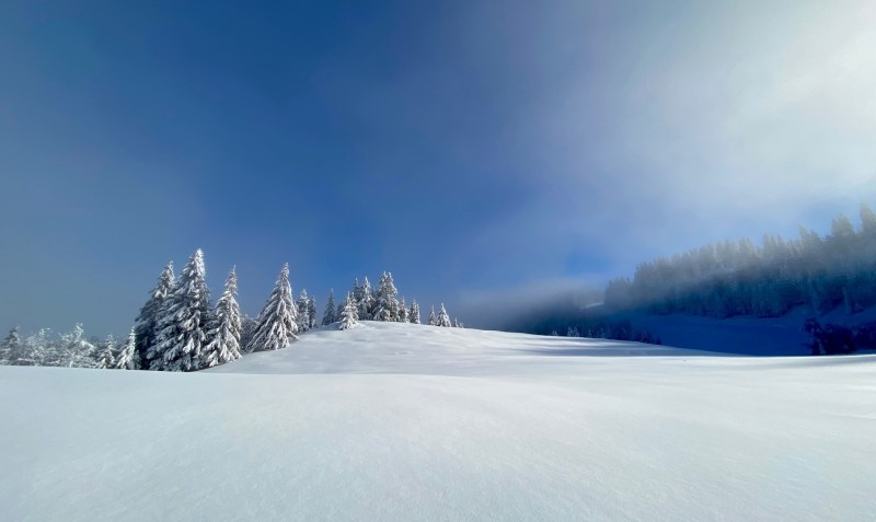 snowflike - paysage enneige et sapins blancs sur le plateau de Beauregard à La Clusaz