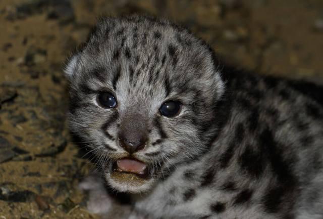 wild-cub-photo-website