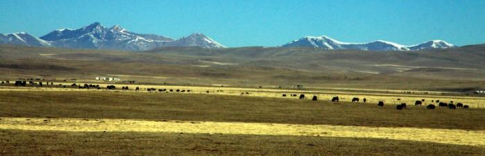 Yushu Horse Festival - The Biggest Horse Festival in Tibet