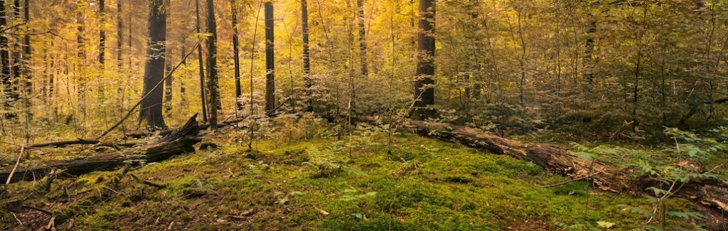 forest-copy-3-1024×325