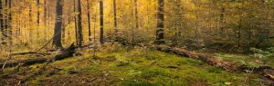 forest-copy-3-300×95
