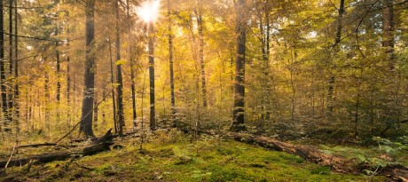 forest-copy-460×205