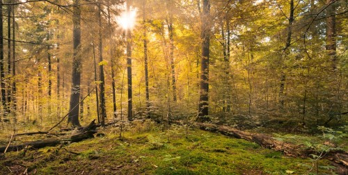 forest-copy-500×252