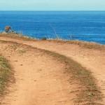 ocean-path-copy-2-150×150