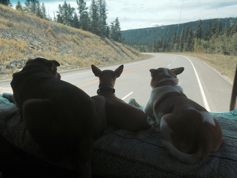 Dogs on RV dashboard