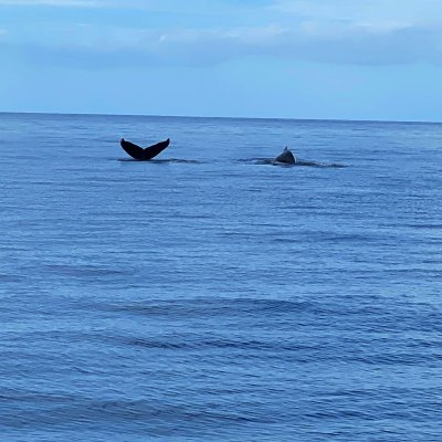 whale tail in the ocean