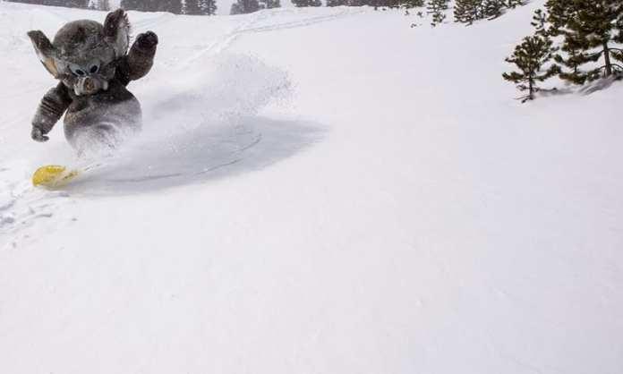 woolly_enjoys_late_season_powder_mammoth_166871