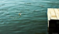 Ribica 02.08.2015